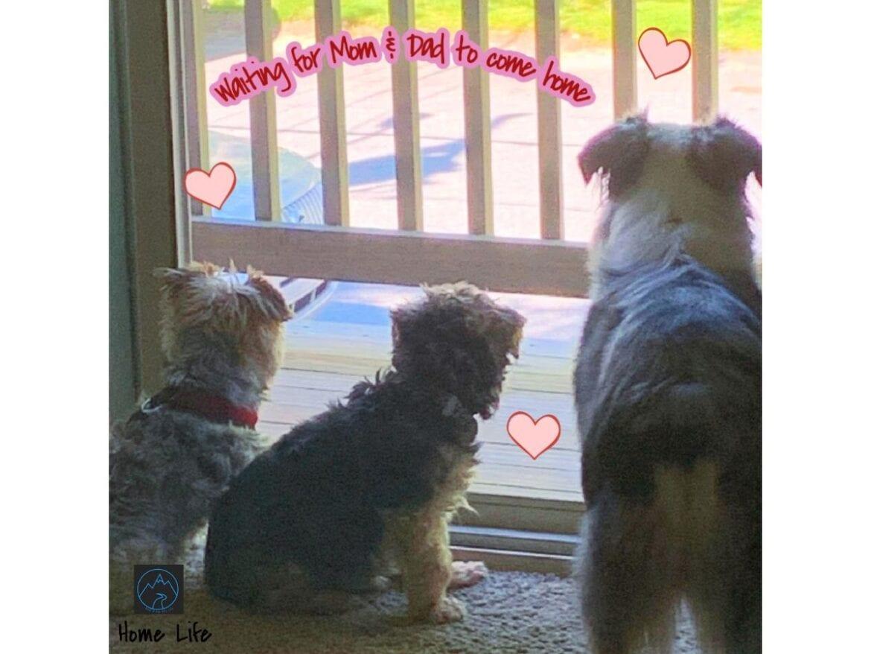 Meet the Pups- Jax, Max, Blue & Willow (3)