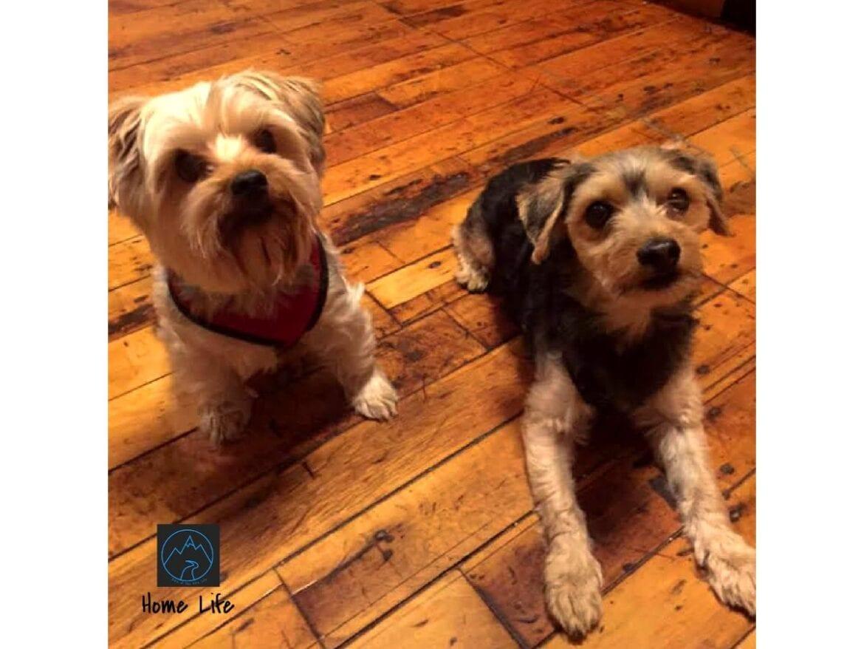 Meet the Pups- Jax, Max, Blue & Willow (2)